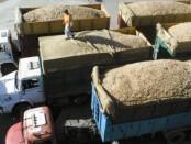 camiones-granos_218819