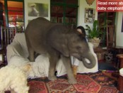 elefante-20160215091552028239