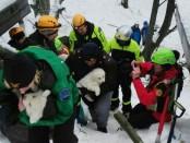 Rescate-perritos-escombros-hotel-Rigopiano_992912275_120833920_667x375