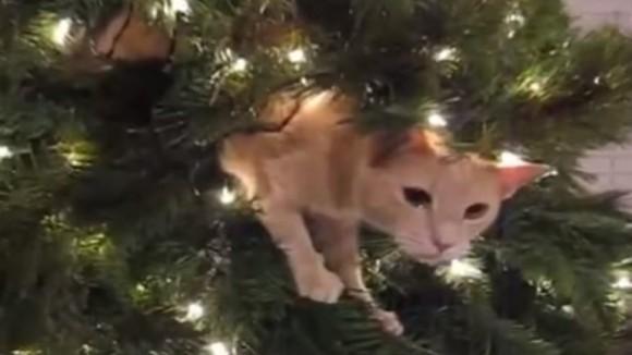 gato-navidad-770x513