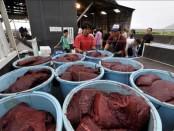 Imagen de archivo que muestra a trabajadores japoneses cargando un camión con carne de ballena en el puerto de Wada, en Chiba, Japón. EFE