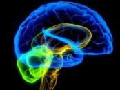 cerebro-leer