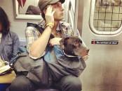 perros-grandes-bolsos-metro-nueva-york-1